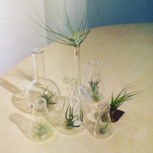 Intter, luchtplant, tillandsia, groen, plant, decoratie, plant zonder onderhoud, gemakkelijke plant, laboglaasje, Pyrex