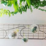 Intter, plants, groen, decoratie, airplant, tillandsia